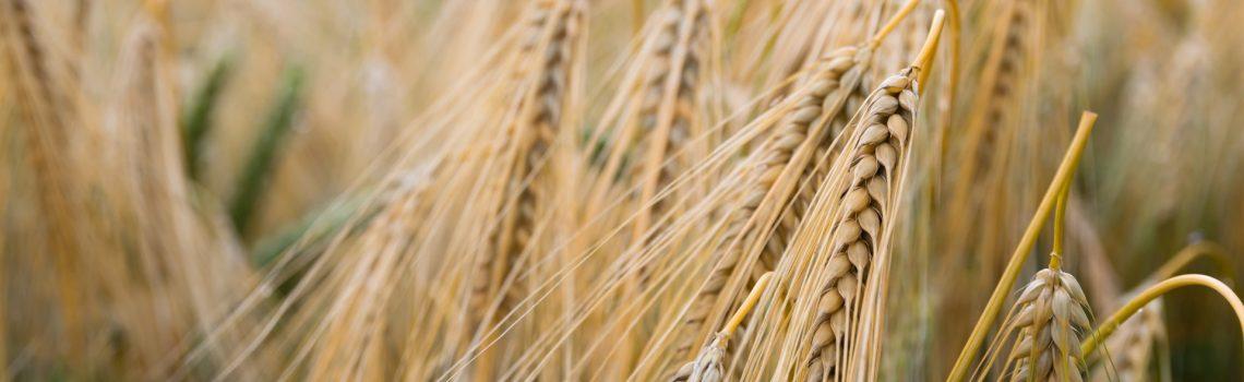 blur-close-up-cropland-454509